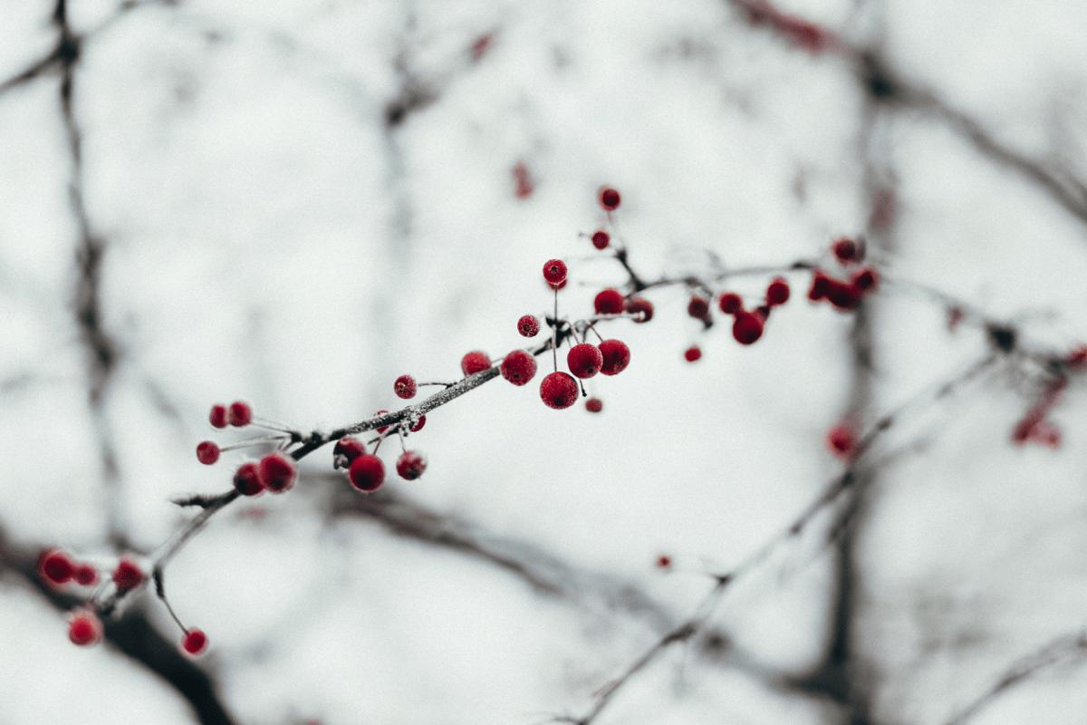 Riprenditi il Tuo Natale