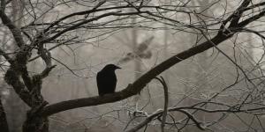 Caro mio corvo nero…