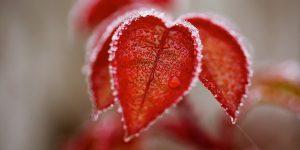 L'amor che muove il sole e l'altre stelle…