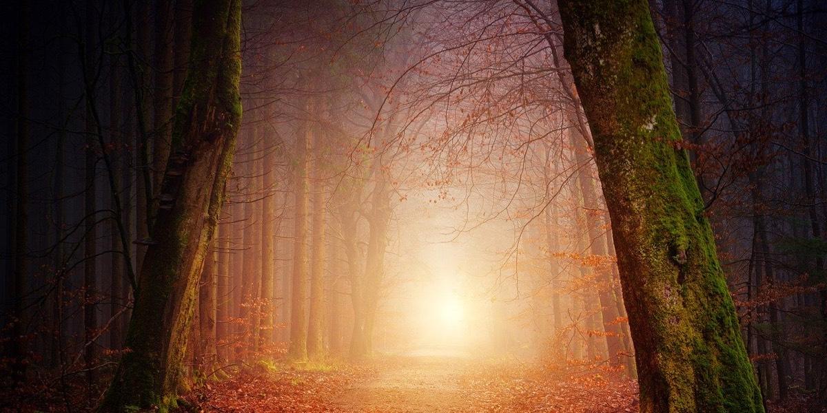 Quando la Donna Selvaggia si fa bosco oscuro